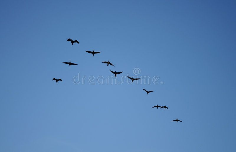Birds Goup Of Birds Fly In The Sky Spon Goup Birds Birds Sky Fly Ad Birds Army Wallpaper Stock Images