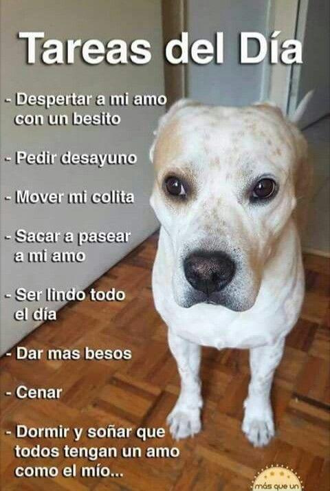 Pin De Mirelys Enid En Frases Bonitas Perros Perros
