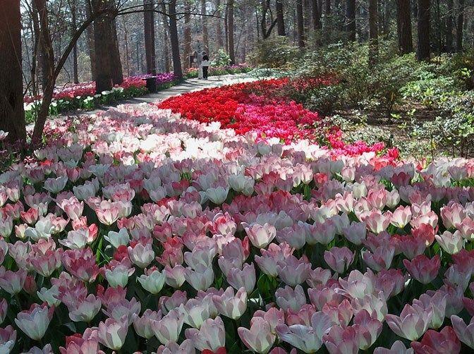 Hot Springs National Park, AR, USA - Garvan Woodland Gardens. Located on the shores of Lake Hamilton, this 210-acre botanical garden contains the ...