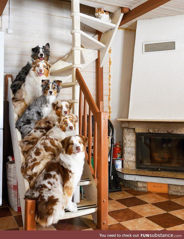 All dogs work on the stairway to heaven - FunSubst