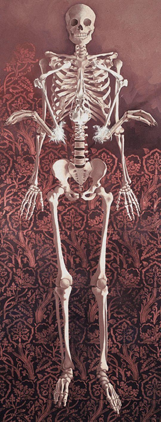 Helen Gregory, Skeletal Study with Sea Bird Remains (2000)
