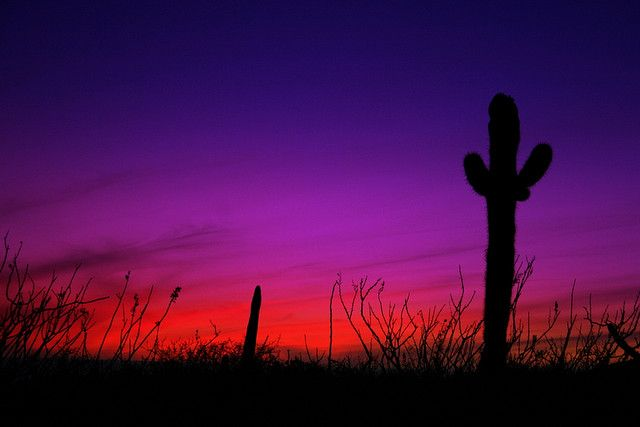 Mexican cactus sunset landscape by Domini1k, via Flickr