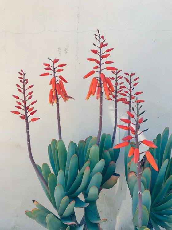 Justina Blakeney Ojai 13 Deco Plantes Plante Verte Promesses