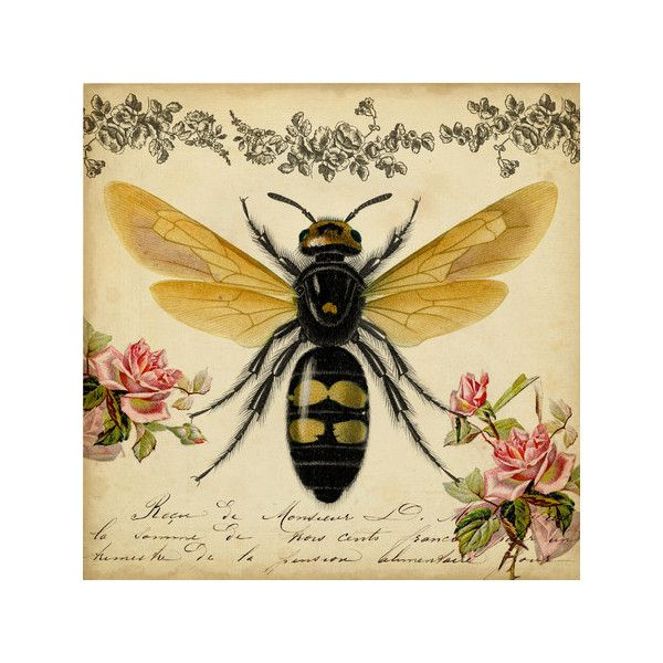 Honey Bee Canvas Print ❤ liked on Polyvore featuring home, home ...