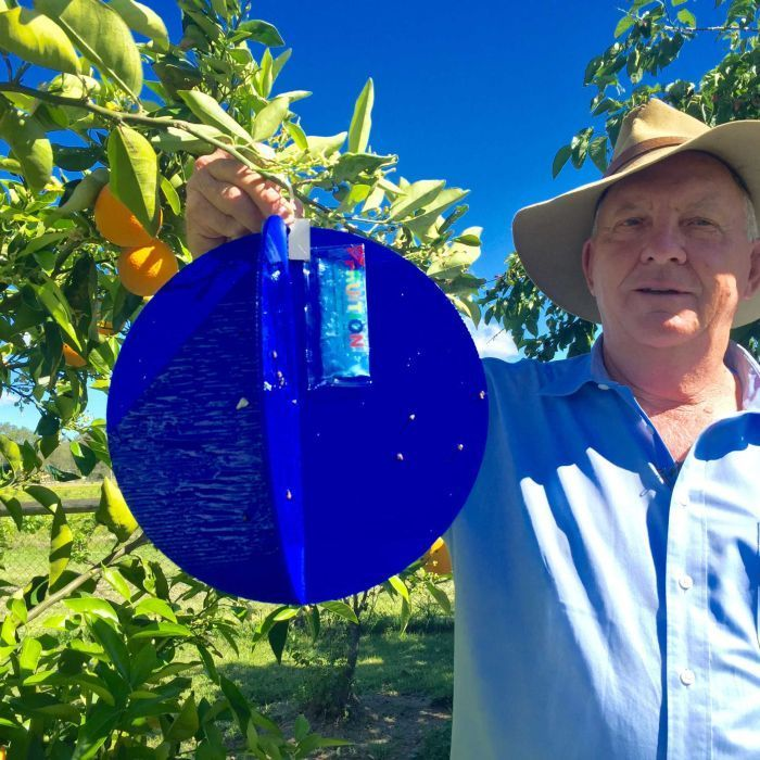 #New trap for pesky fruit fly will help stop crop rot, Queensland inventor says - ABC Online: ABC Online New trap for pesky fruit fly will…