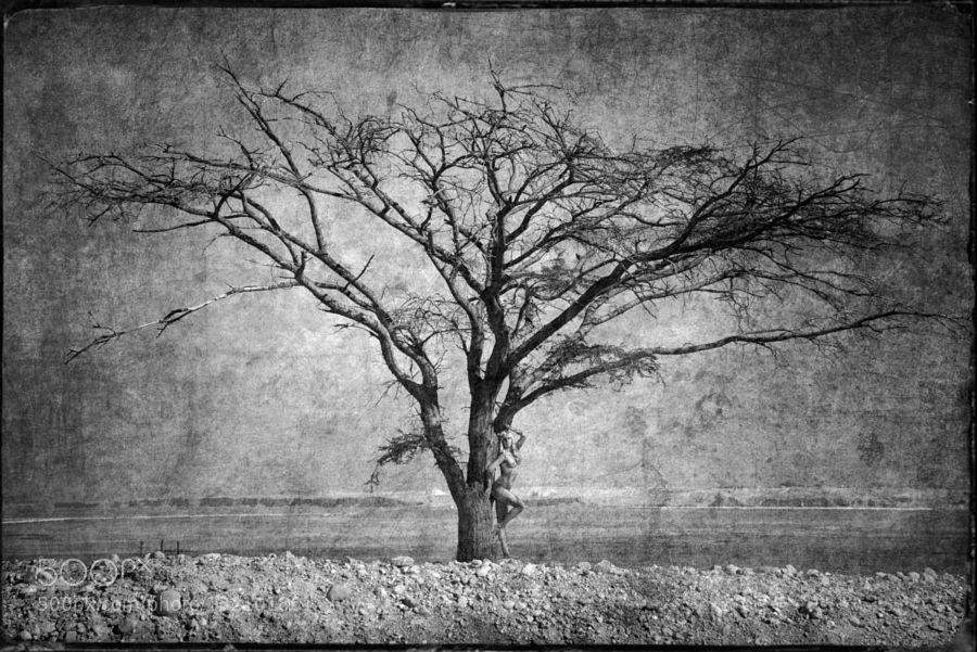TREE by vanzetti