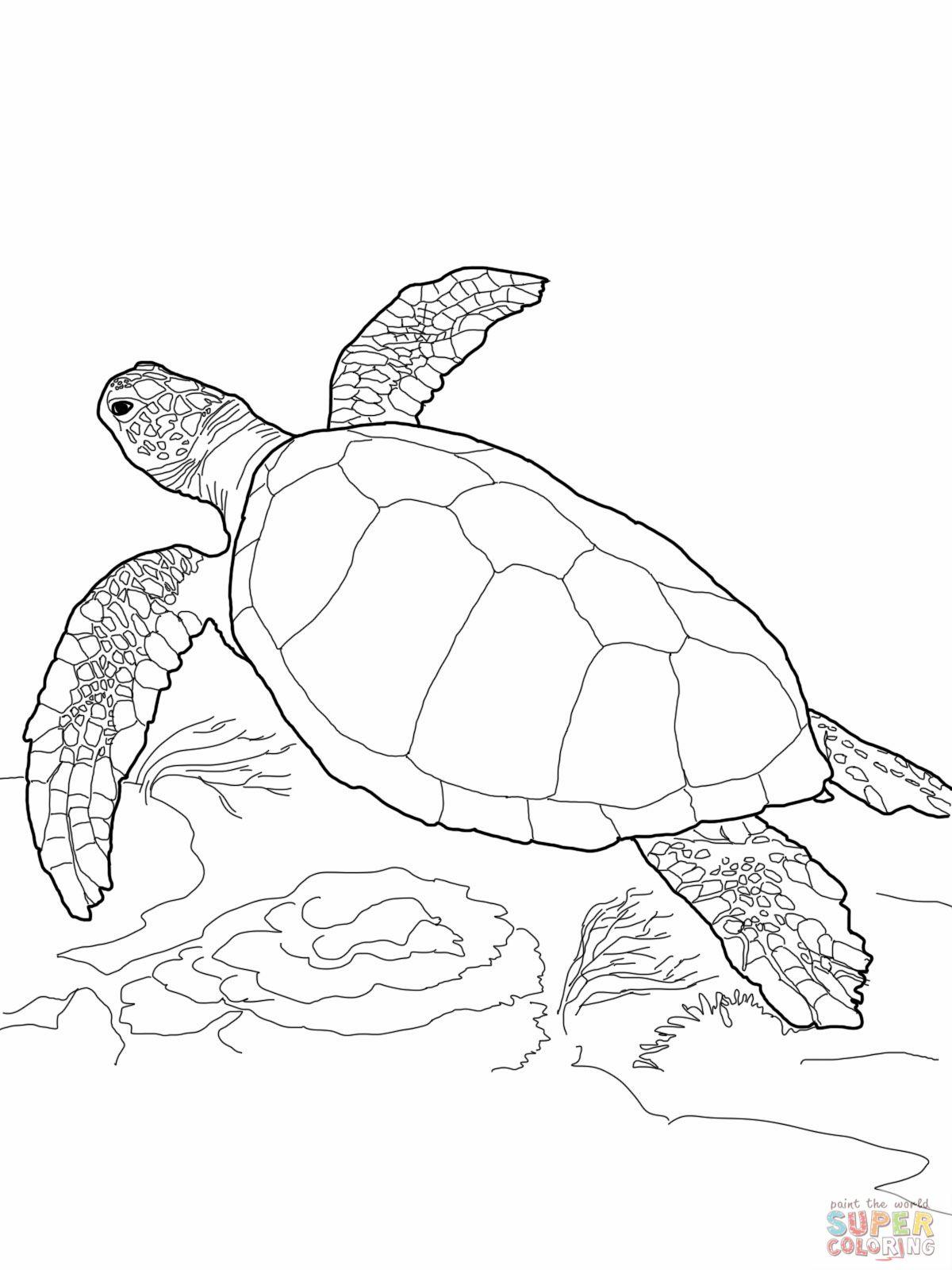 Loggerhead Sea Turtle Caretta Caretta Boyama Sayfalari Cizim