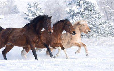 L Hiver Cheval Incroyable Mignon Animal La Neige Trois Chevaux Clydesdale Beaux Chevaux Cheval