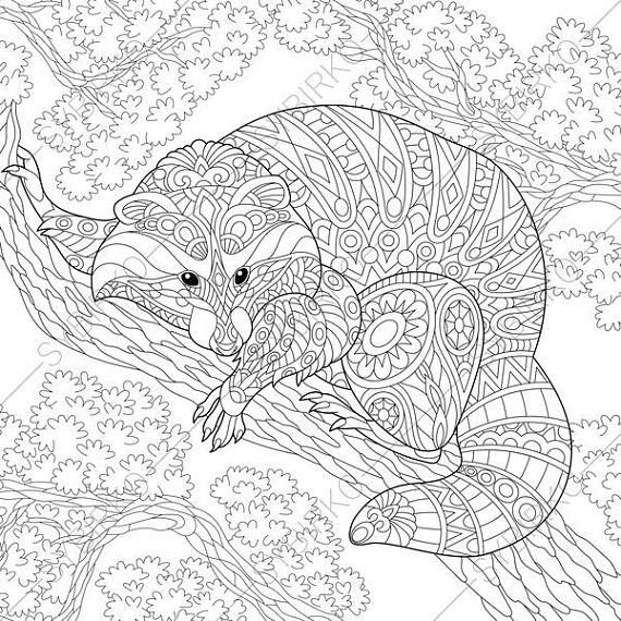 3 Coloring Pages Of Raccoon From Coloringpageexpress Shop Hand Drawn Illustrations Both For Ad Animal Coloring Books Animal Coloring Pages Bird Coloring Pages