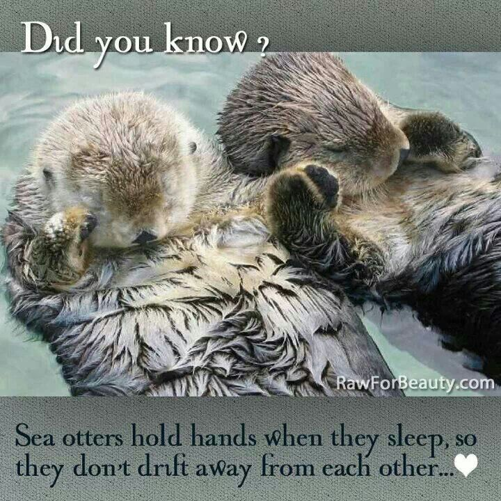 Protect wildlife! Animals feel emotions. We all have a right to live.