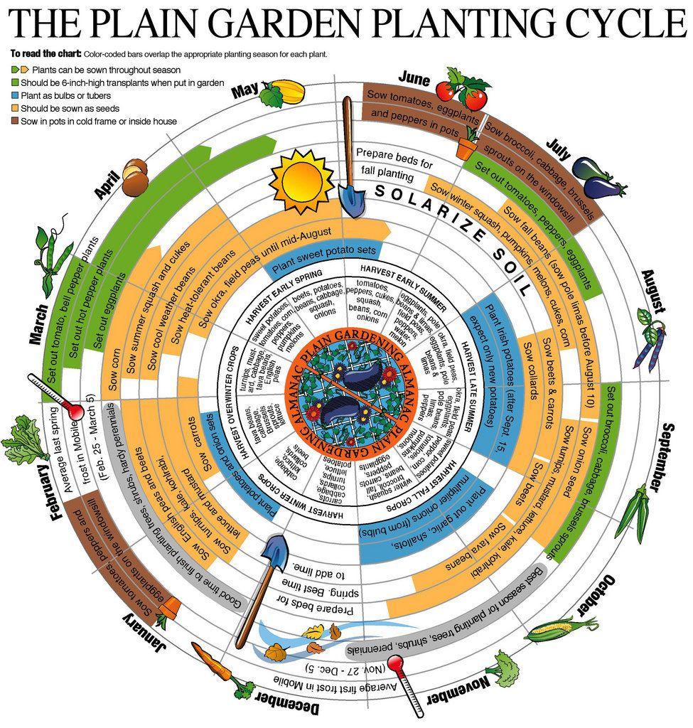 The Plain Garden Planting Cycle Finch Gardens Alabama and The