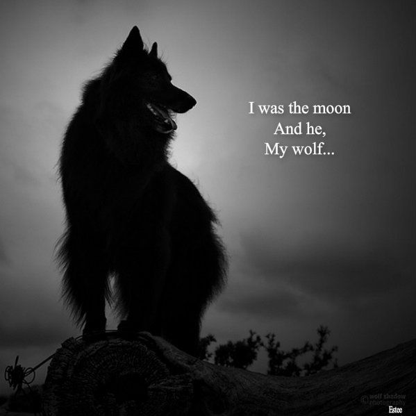 After Watching The Grey With Liam Neeson I Really Dont Like Wolves Or Dogs Snow Planes Cold Remote Places Anymore