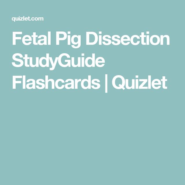 Fetal Pig Dissection StudyGuide Flashcards | Quizlet | BMCC ...
