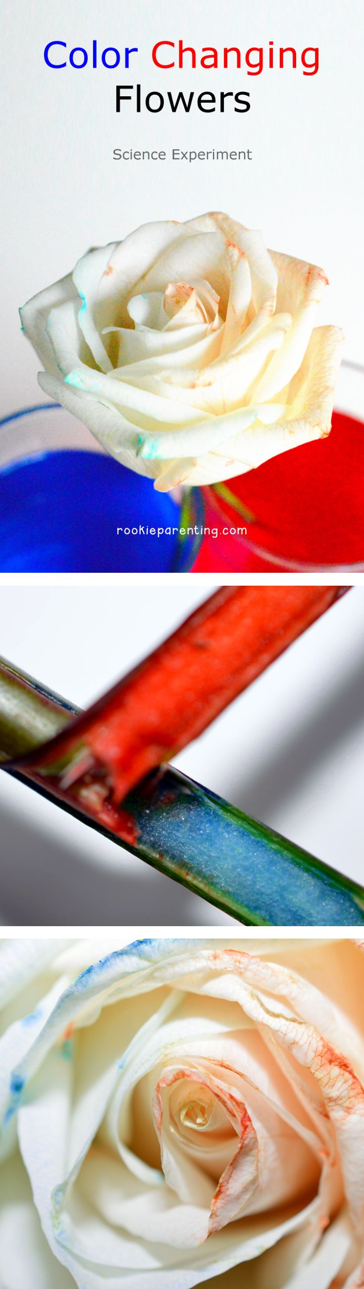 Color Changing Flowers Science Project | Change, Flowers and Activities