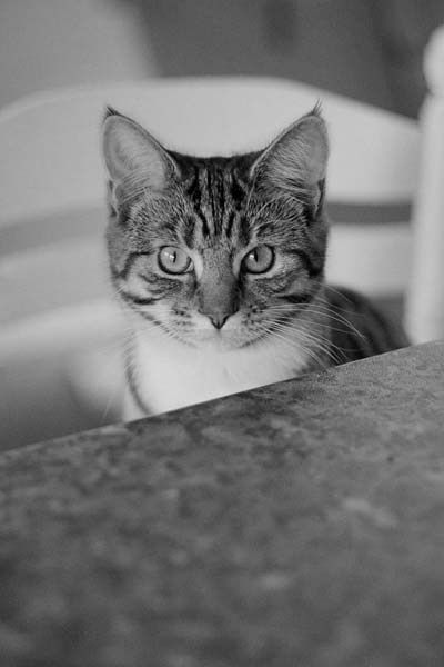 Cat on a stool (With images) Cute cats photos, Baby cats
