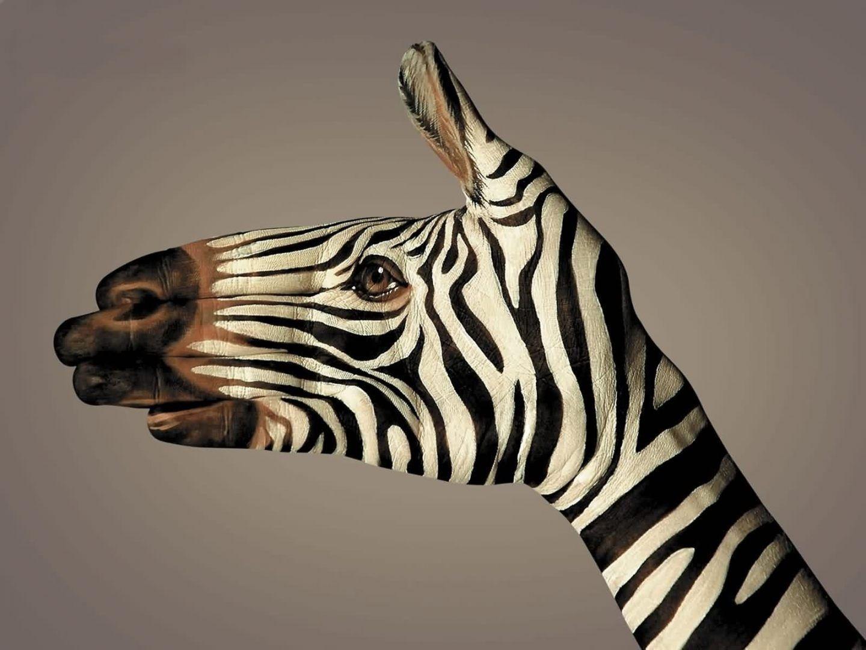 Aquí tenim un body paint parcial, on una mà imita una zebra amb tot ...