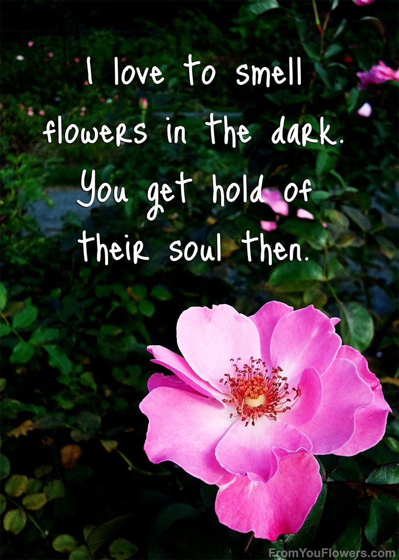 Beautiful quote from the inimitable anne shirley a beloved beautiful quote from the inimitable anne shirley a beloved character in lucy maud montgomerys anne of green gables series 3 i love to smell flowers in izmirmasajfo