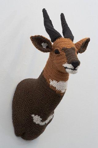 knitedermy