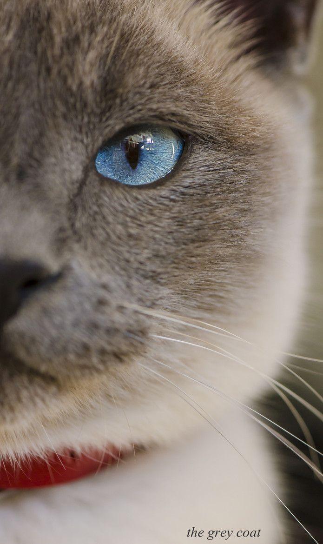 "Онлайн психолог домашних питомцев - animal psychology https://www.facebook.com/animal.psychology Психолог онлайн. ""Психология личного пространства"" http://psychologieshomo.ru"