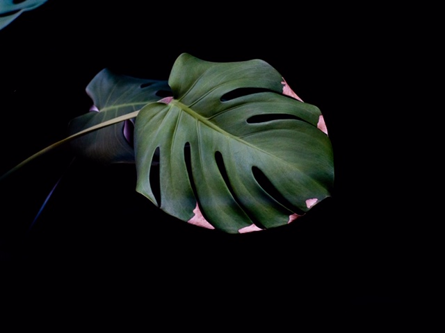 Holistic Healing hypnotherapy | Plant leaves, Holistic ...