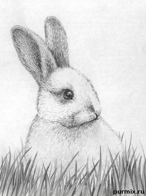 Resultado de imagen para conejo dibujo realista | dibujos | Animals