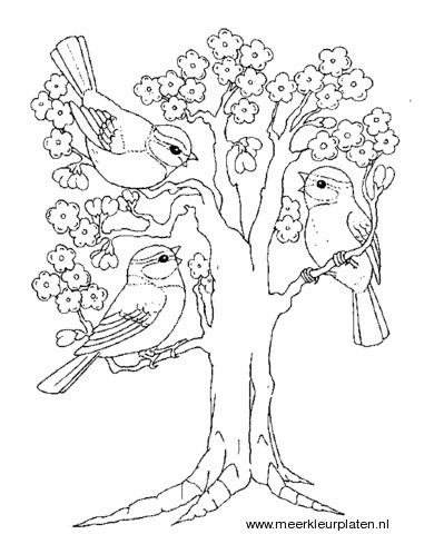 boom met bloesem kleurplaten coloring pages
