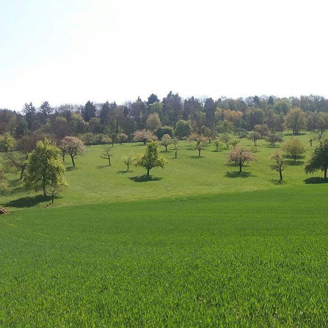 Schöne offene Landschaft im Kraichgau zw. Remchingen u Königsbach #hiking #wanderlust #wandervogel #wandern #kraichgau #remchingen #königsbach #streuobstwiese #badenwuerttemberg #muschelkalk