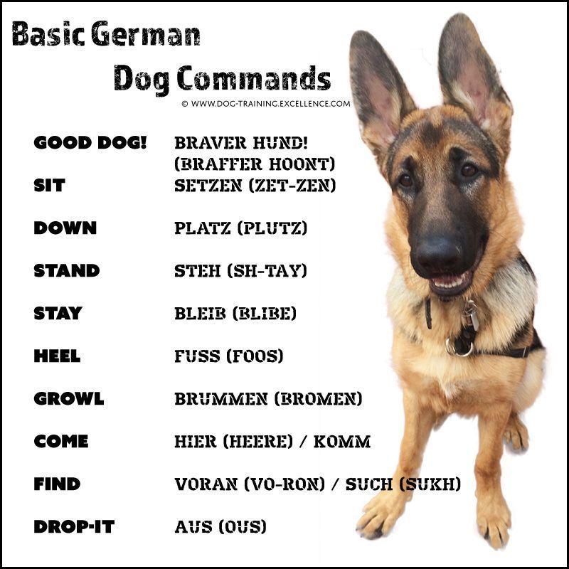 21 German Dog Commands To Train Your Dog Germanshepherd German