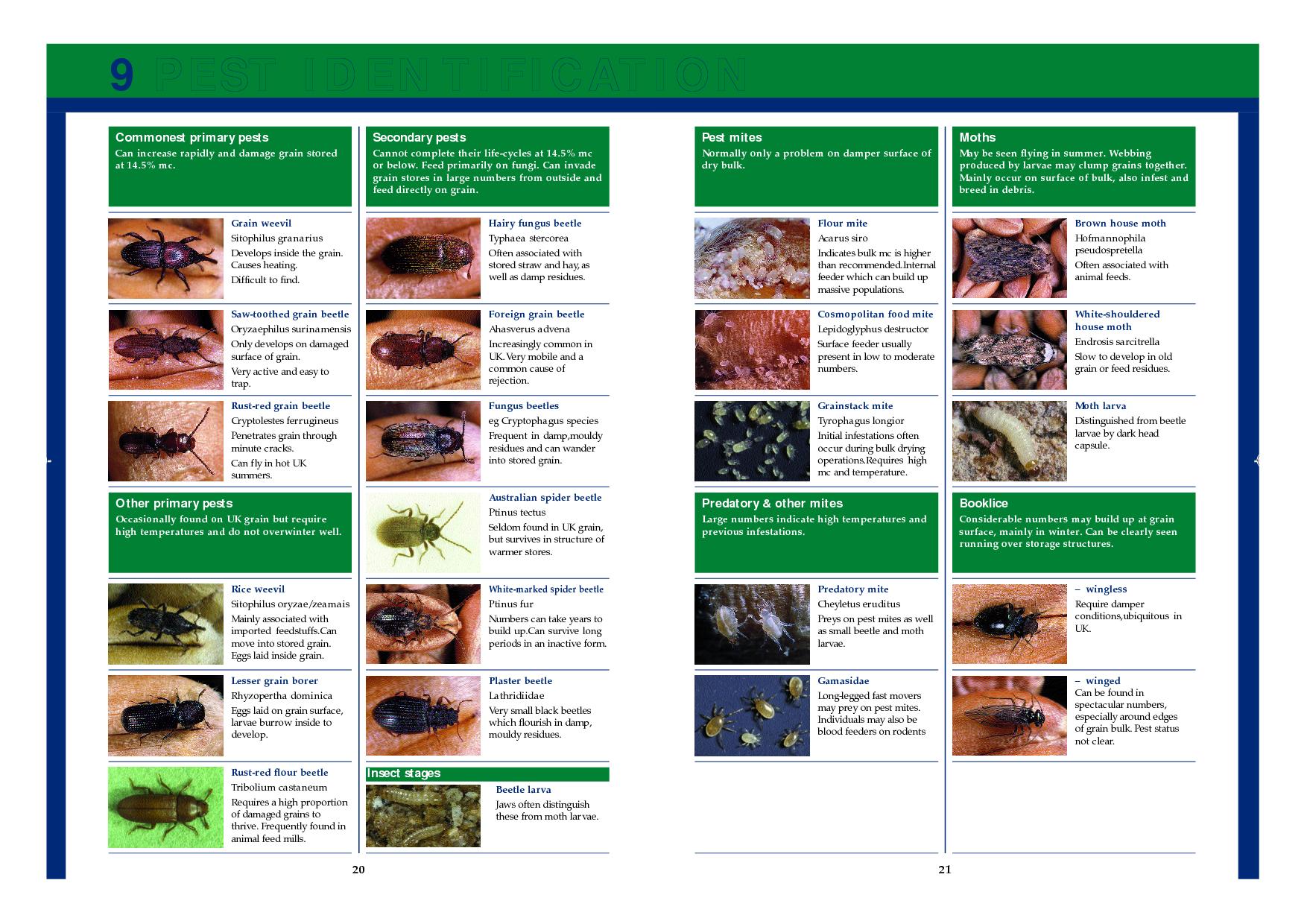 Mite Identification Chart | Pest Identification | cat mites | Pinterest