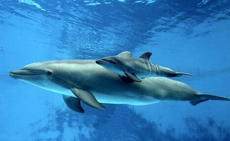 Mother Dolphin With Baby Delfines Bajo El Mar Ballenas