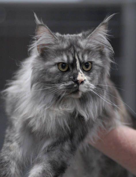 Epingle Sur Kittie Cats