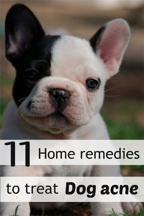 11 Home Remedies To Treat Dog Acne Friendly Dog Breeds