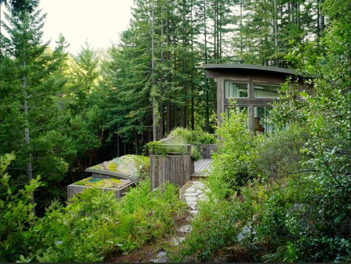Feldman Architecture Cottages In The Mill Valley Forest House In The Woods Cottage In The Woods Forest House