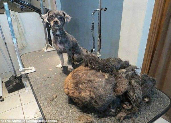 El corte de cabello la perra