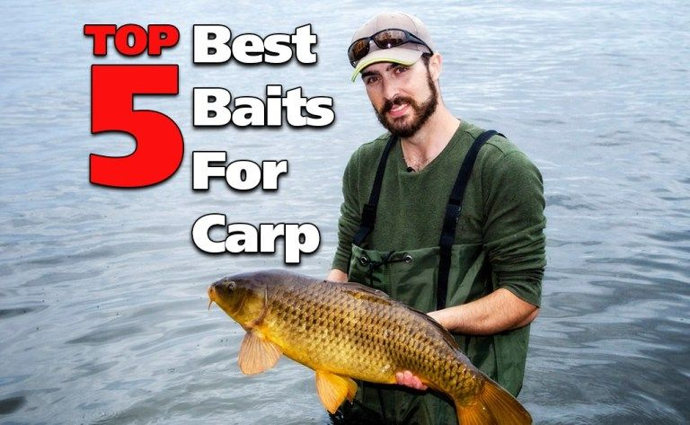 Top 5 Best Baits For Carp Fishing | Fish'n Canada in 2020