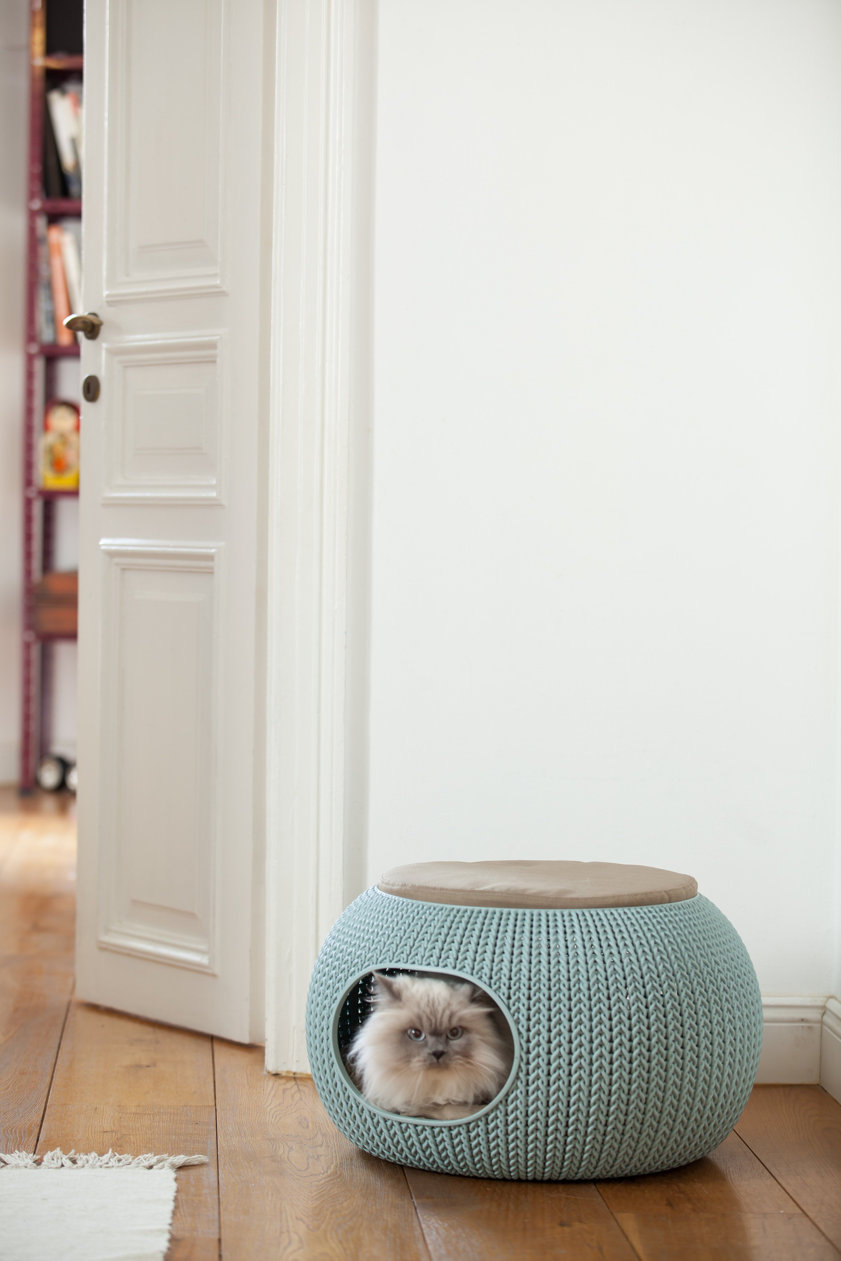 Which Foods Should I Avoid Giving My Cats And Dogs Designer Pet Beds Animal Room Pet Home