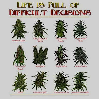 Difficult Decisions - Weed/Humor / Grey T-Shirt / Sizes- S,M,L,XL
