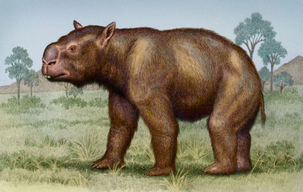Diprotodon optatum 2 by on