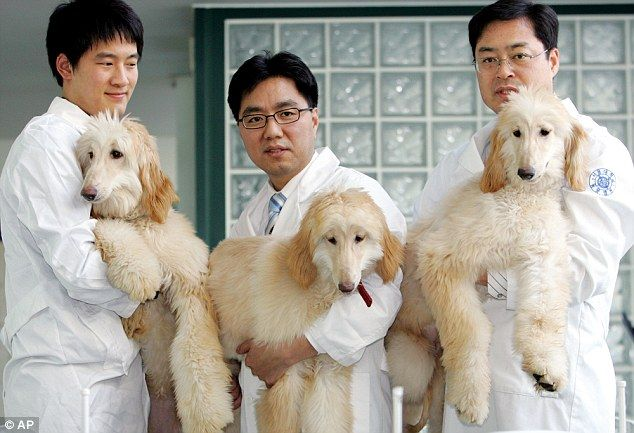 An 'animal cloning factory' is set to be built in Tianjin city to produce pet…