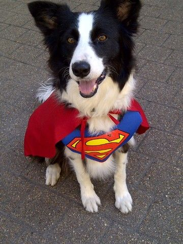 Superhero To Herd You To Safety Puppies And Kitties Cat Halloween Costume Herding Cats