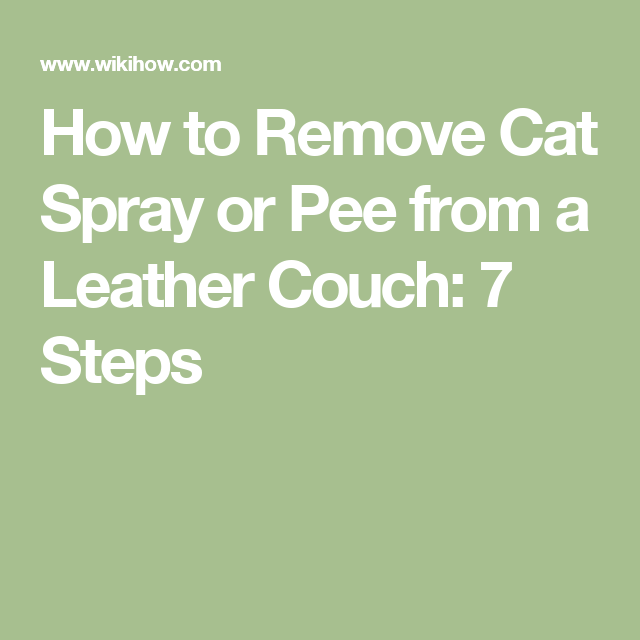How To Remove Cat Spray Or Pee From A Leather Couch 7 Steps Catsprayingodorremoval Cat Urine Smells Cat Pee Smell Removal Cat Pee Smell