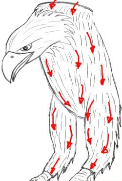 1  Drawing an eagle  STEP 20  Add feathers to the rest of
