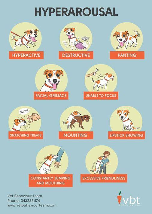 Hyperarousal Handout Dog Body Language Dog Training Training