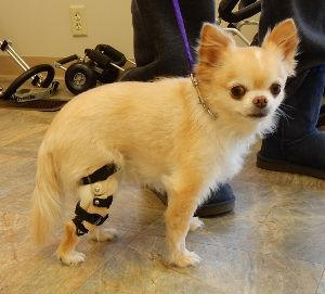 Dog Story - Maya - Tan - Dog Knee Brace | Things I have to