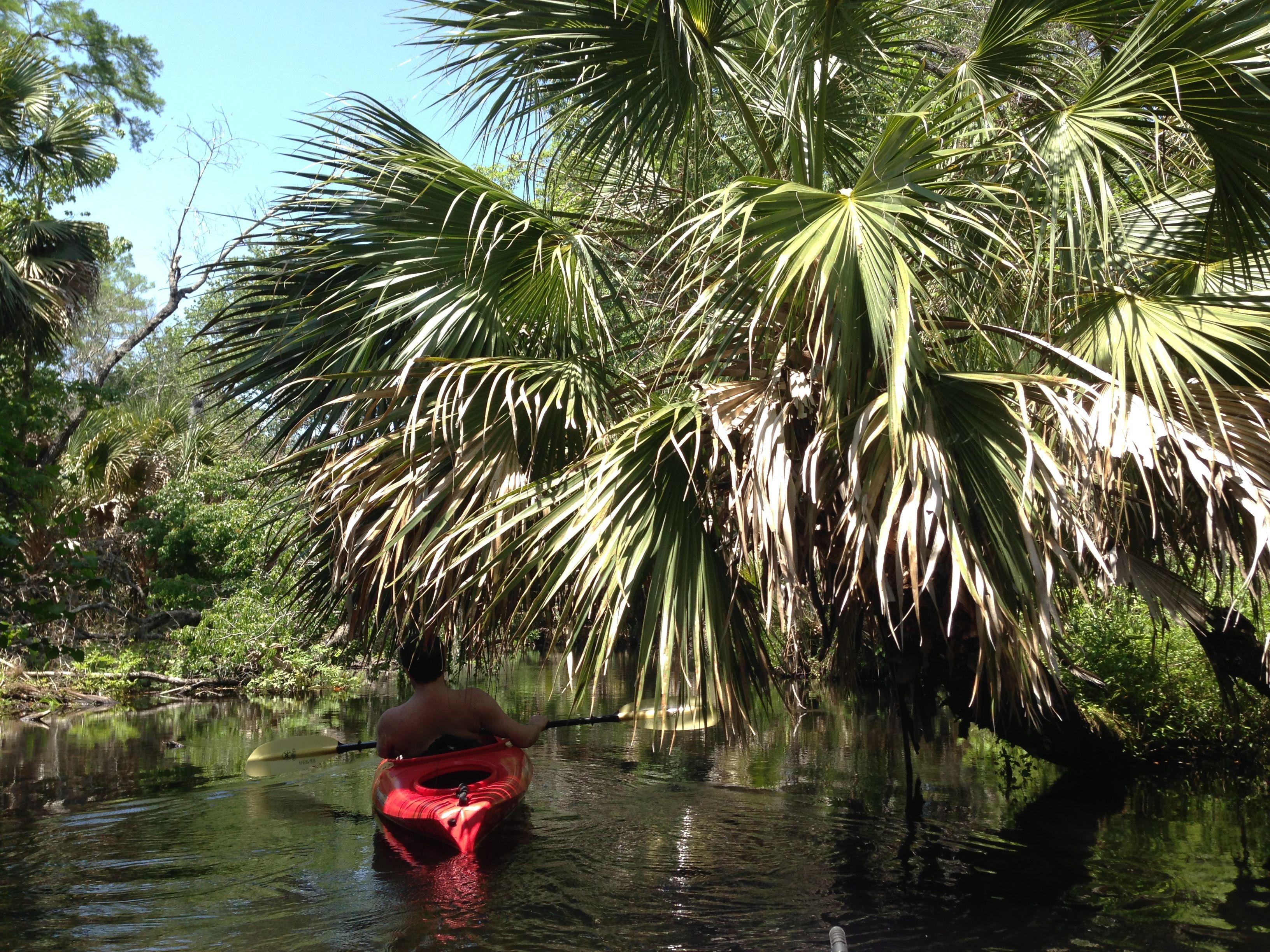 Juniper springs ocala national forrest kayaking florida