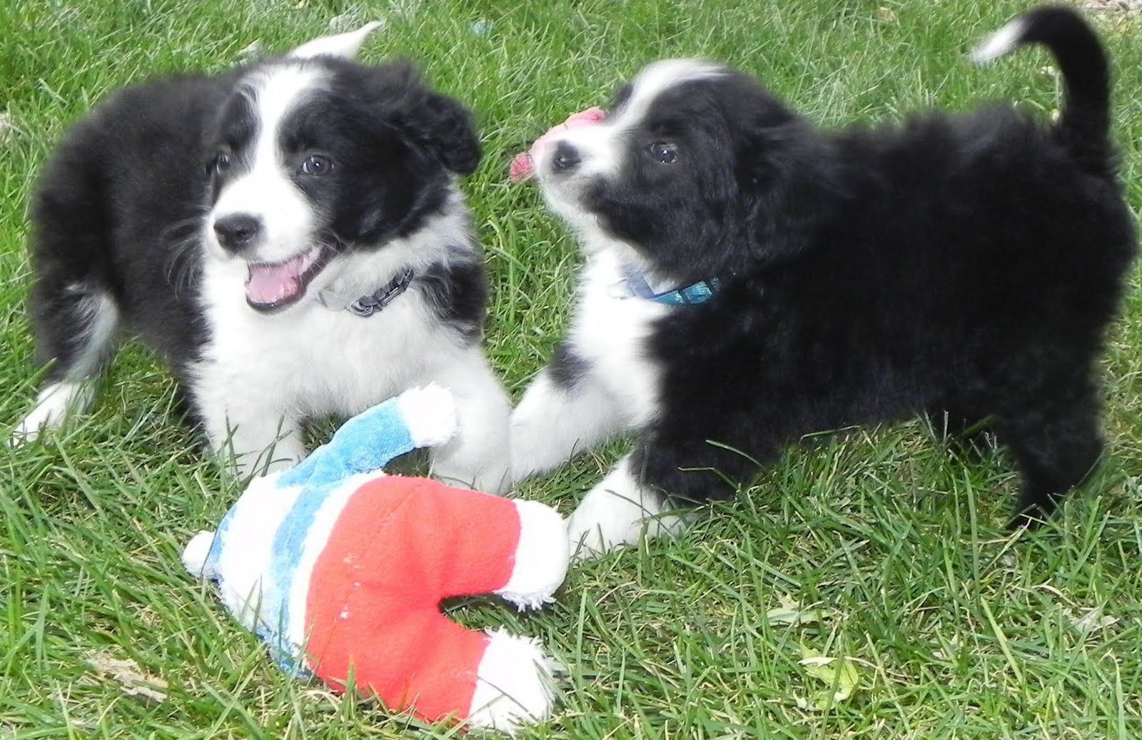 Colorado Puppy's K9 Corner via http//bit.ly/epinner