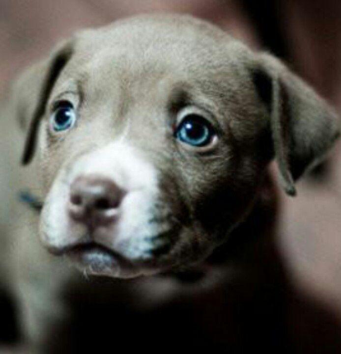 20 Puppies That Ll Make Your Day Weimaraner Puppies Puppy Dog