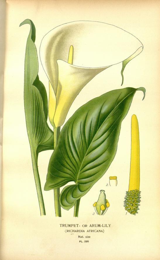 V 4 Favourite Flowers Of Garden And Greenhouse Biodiversity Heritage Library Botanical Drawings Botanical Illustration Vintage Botanical Prints