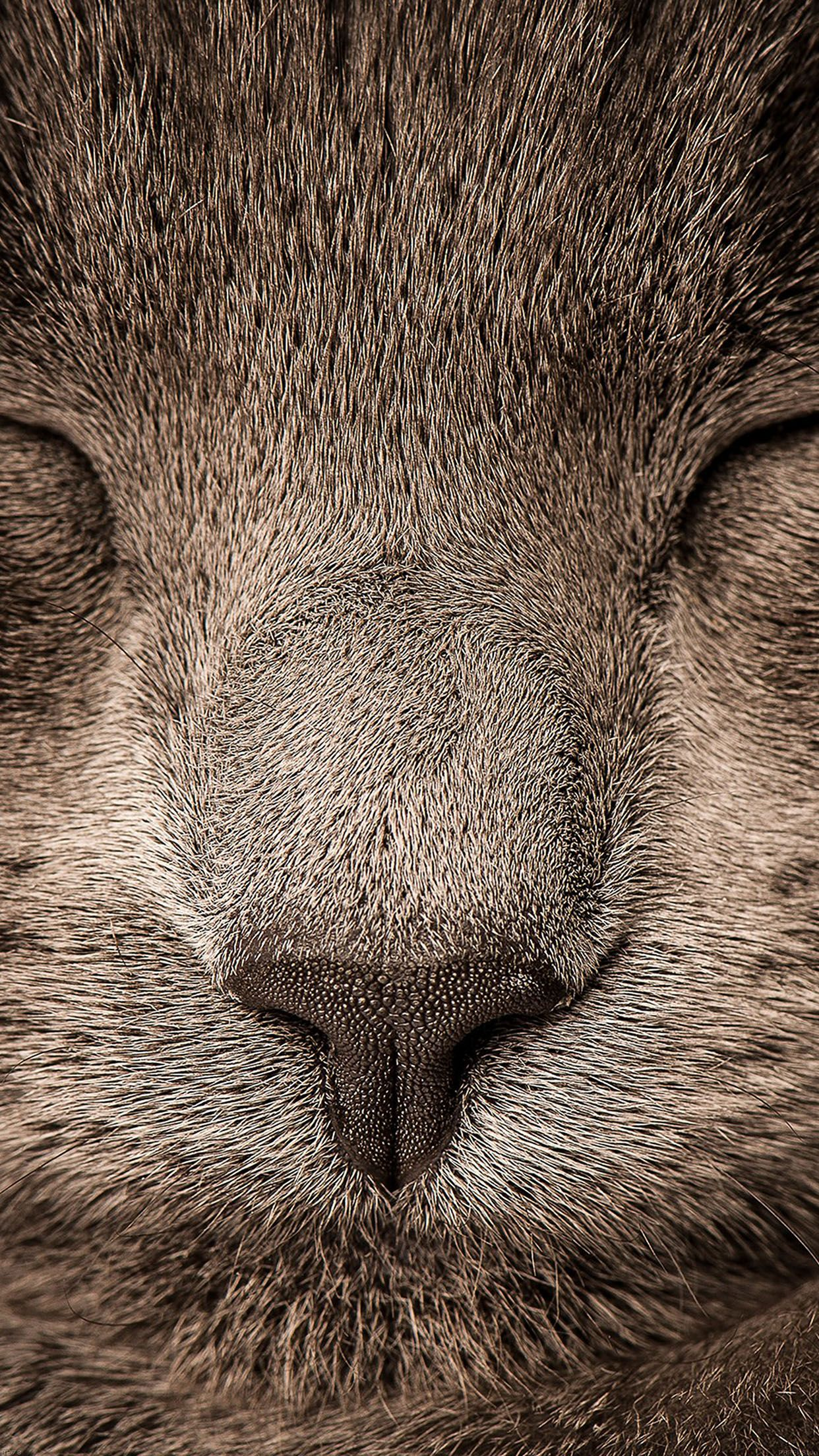 Tap And Get The Free App Animals Cat Sleeping Grey Muzzle