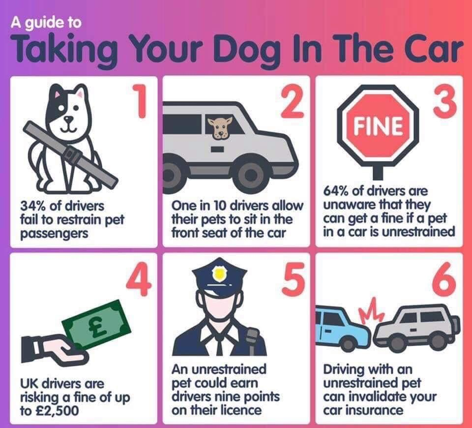 Did You Know That It Is Against Uk Law To Drive A Car If Your Pet